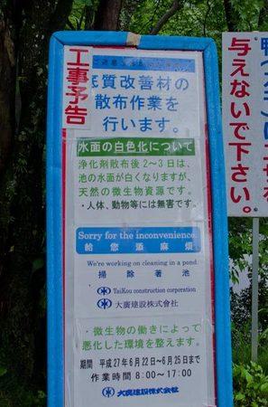 20150621kumoba08.jpg