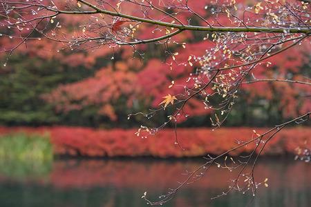 20161112kumoba01-0630-momiji02.jpg