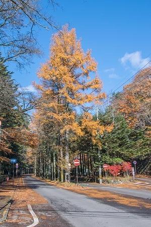 20161112mikasa-dori-karamatsu.jpg
