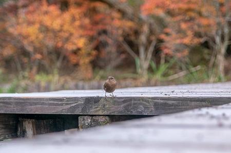 20191115kumoba-bird01.jpg