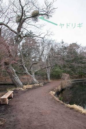 20200304kumoba-yadorigi01.jpg