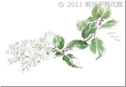 0730noriutsugi-sukashi.jpg