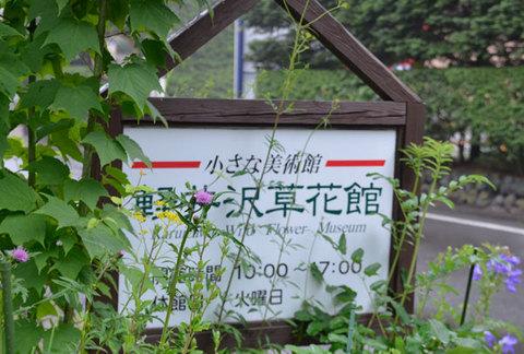 20130729nohara-azami01.jpg
