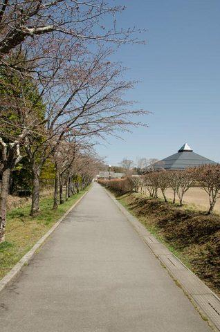 20140424矢ヶ崎公園オオヤマザクラ01.jpg
