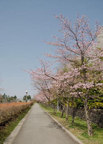 20140427yagasakipark03.jpg