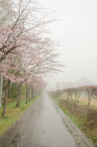 20140430yagasaki01.jpg