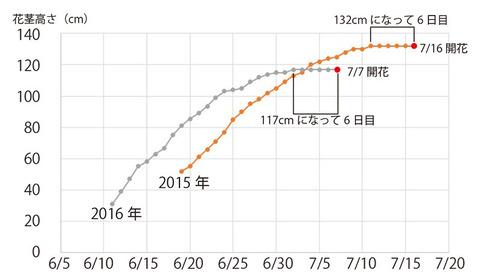 2015-2016看板前ユウスゲ花茎グラフ.jpg