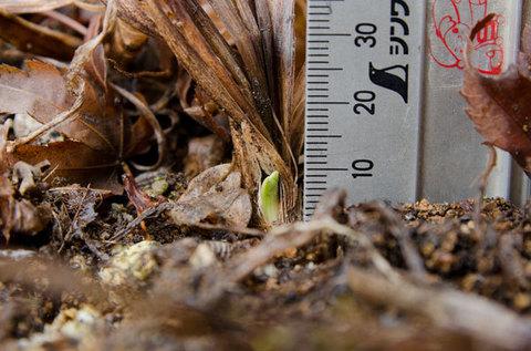 20150320yusuge_3y_planter01.jpg