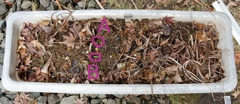 20150320yusuge_3y_planter02.jpg