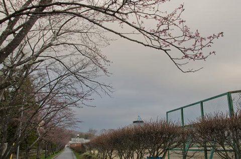 20150422yagasaki-sakura04.jpg
