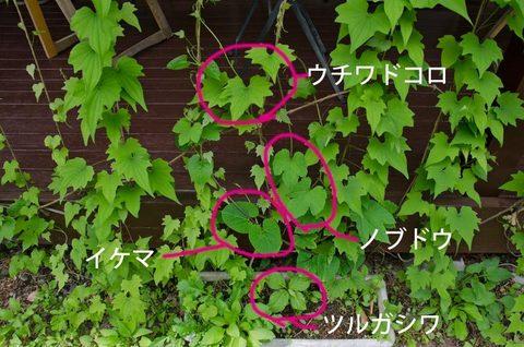20150603midori02.jpg