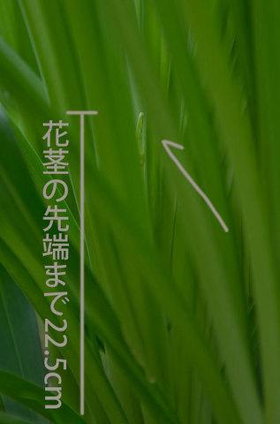 20150617yusuge_roji_kakei02.jpg