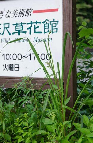 20150625yusuge_roji_kakeiA01.jpg