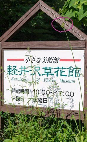 20150711yusuge_roji_kakeiA01.jpg