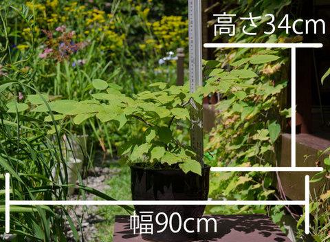20150810inubuna_A01.jpg
