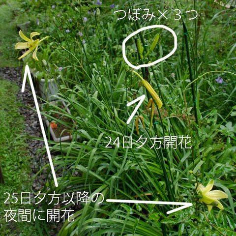 20150826yusuge_roji01.jpg