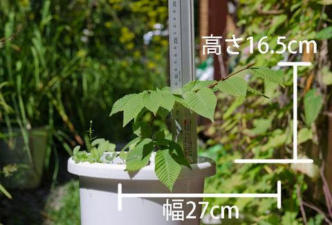 20150903inubuna_B01.jpg