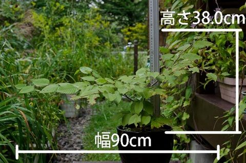 20150916inubuna_A01.jpg