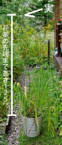 20150924yusuge_7y_pot_00.jpg