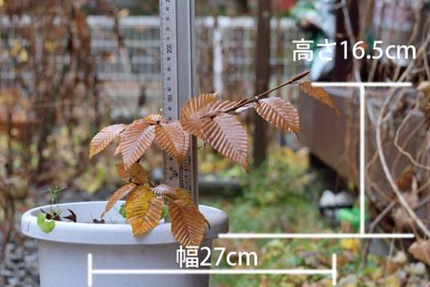 20151108inubuna_B01.jpg