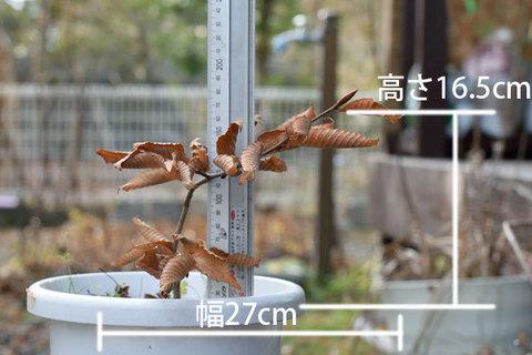 20151129inubuna_B01.jpg