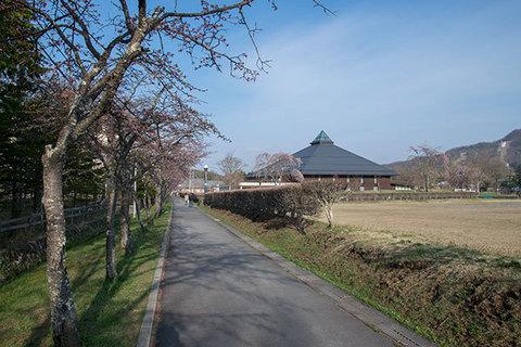 20160420yagasaki-sakura03.jpg