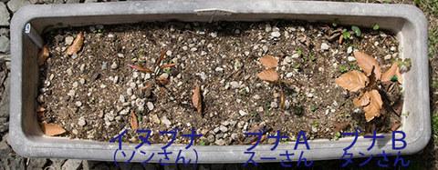 20160423buna&inubana01.jpg