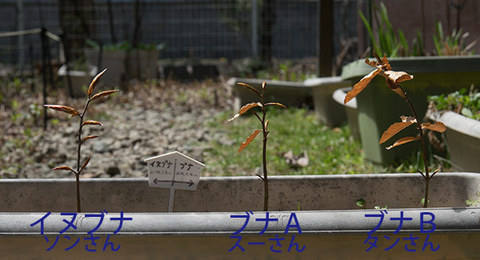 20160423buna&inubana02.jpg