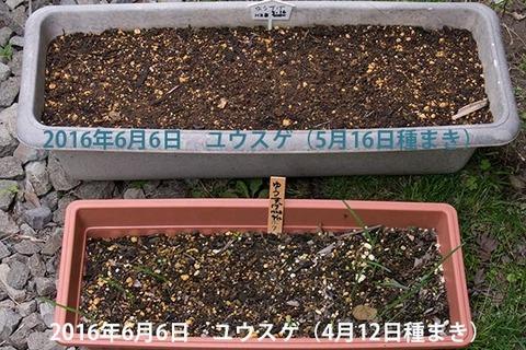 20160606yusuge_1y_planter_01_20160412_0516.jpg