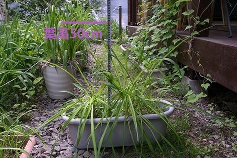 20160606yusuge_8y_planter_01.jpg