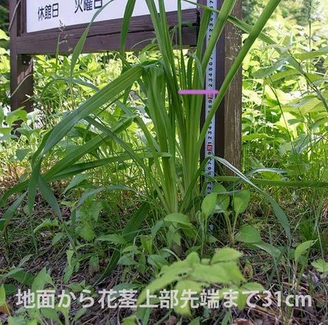 20160611yusuge_kakei02.jpg
