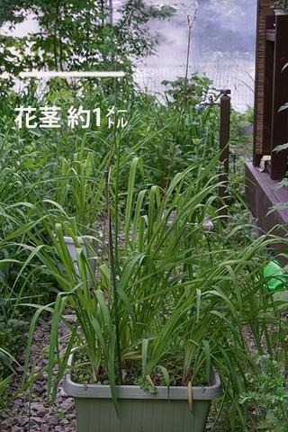 20160701yusuge_8y_planterA_01.jpg