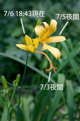 20160706yusuge_rojiB05_1843.jpg