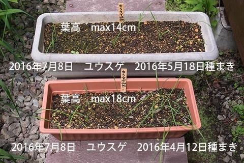 20160708yusuge_1y_planter_01_20160412_0518.jpg
