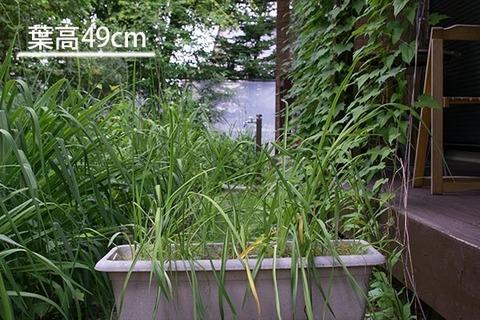 20160708yusuge_5y_planter_01_20130423.jpg