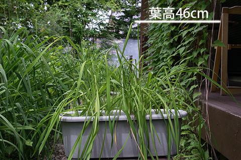 20160708yusuge_8y_planter_A01.jpg