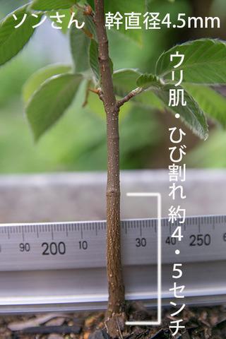 20160717inubana03.jpg