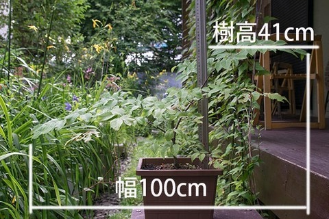 20160802inubuna_A01.jpg