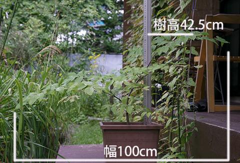 20160825inubuna_A01.jpg