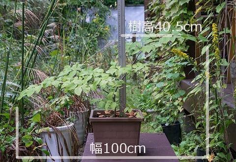 20160924inubuna_A01.jpg