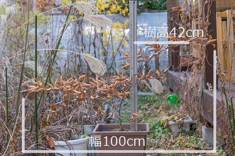 20161113inubuna_A01.jpg