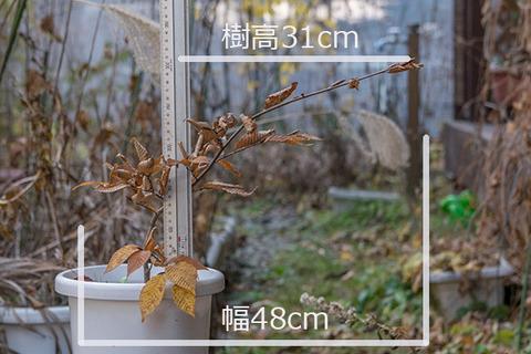 20161113inubuna_B01.jpg