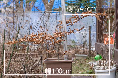 20161130inubuna_A01.jpg