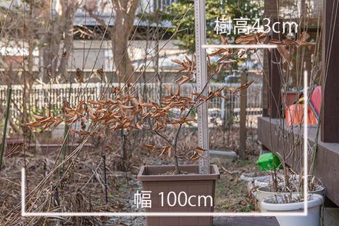 20161225inubuna_A01.jpg