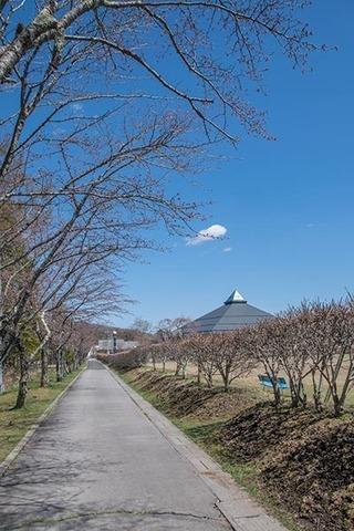 20170423yagasaki-sakura01.jpg