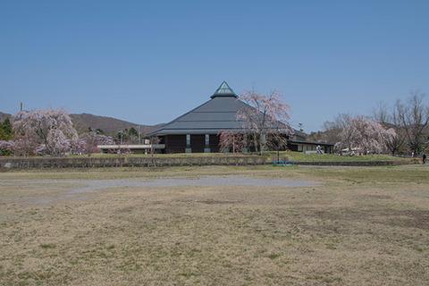 20170430yagasaki-sakura04.jpg