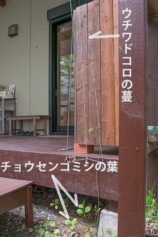20170512midori02gomishi&uchiwa.jpg