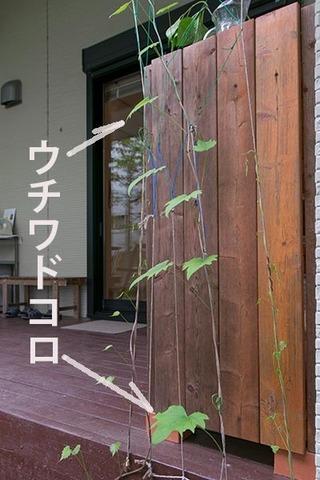 20170524midori02_uchiwadokoro.jpg