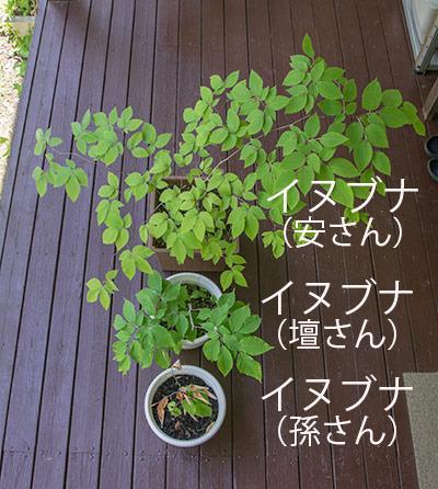 20170528inubuna_4y_an_dan_son_01.jpg