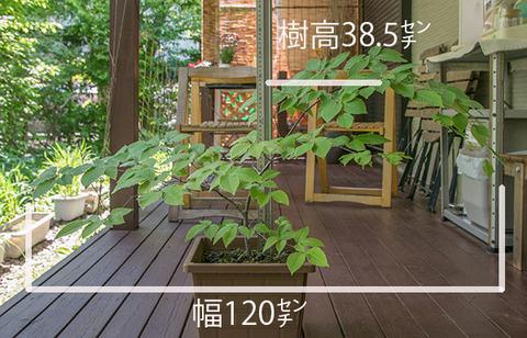 20170528inubuna_A01.jpg